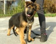 Тест Кэмпбелла - определение характера щенка